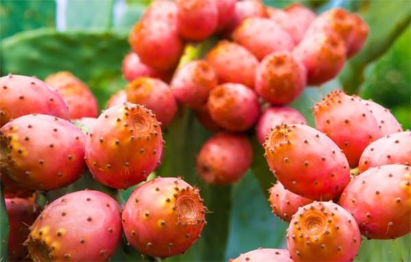 Retrouve le nom de ce fruit!